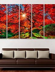 e-HOME® plátně umění javor dekorace malování set 5