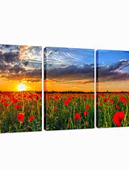 vizuální star®garden plátně moderní svítání triptych umění zdi připraven k zavěšení