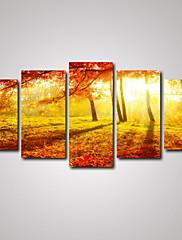 Volný čas / Krajina / Botanický motiv / Fotografie / Romantické / Cestování Na plátně Pět panelů Připraveno k Pověste , Horizontální