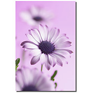 Printed Canvas Art Floral  Purple Love by Flowerphotos with Stretched Frame