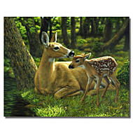 Printed Canvas Art Animal First Spring by Crista Forest with Stretched Frame