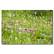 Printed Canvas Art Floral  Meadow Of Color by Dan Ballard with Stretched Frame