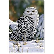 Impreso Pantalla Animal Búho Nevado de William Vanderdasson con el marco de estirado