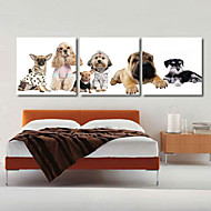 Taulupohjat taide Animal Koirat setti 3