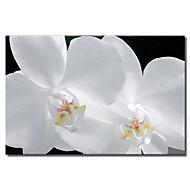 Stretched Canvas Art Floral Pure Petal