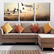 Stretched Canvas Art Landscape Farmland Set of 3