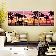 Stretched Canvas Art Landscape Sea Palm Set of 3