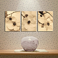Stretched Canvas Art Floral in Spring Set of 3
