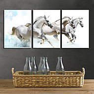 Stretched Canvas Print Art Animal White Horses Set of 3