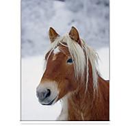 klasický kůň v zimě roletou
