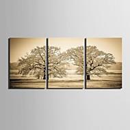 e-Home® sträckta canvas konst träd dekoration målning uppsättning av 3