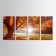 Paisagem / Botânico Impressão em tela 4 Painéis Pronto para pendurar , Horizontal