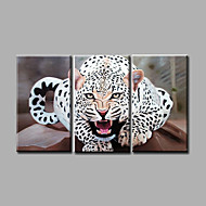 Ready to Hang Stretched Museum Quality Hand-Painted Oil Painting Canvas Wall Art  Animals leopard Three Panels