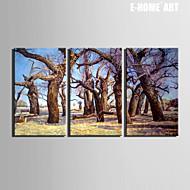 Landscape / Kasvitiede Canvas Tulosta 3 paneeli Valmis Hang , Horizontal