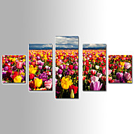 5 Panels Landscape Canvas Print Holland Tulip Flower Ready to Hang,Any Shape with Pure Cotton Drawing Core