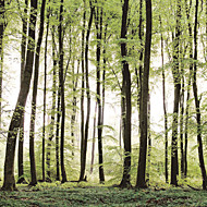 Trær / Blader Tapet til Hjemmet Moderne Tapetsering , Lerret Materiale selvklebende nødvendig Veggmaleri , Tapet