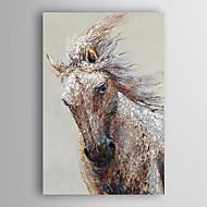 ručně malované olejomalba zvíře běžící kůň s nataženém rámem 7 stěny arts®