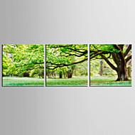Impresiones de ArteTres Paneles Estampado Decoración de pared For Decoración hogareña