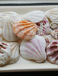 Wedding Décor Beach Themed Shells - Set of 4 Packs (35 pieces/Pack)