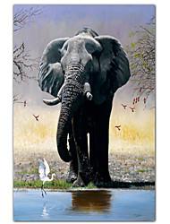 Печатные Слон искусства животными, цапля и Карминах по Pip McGarry