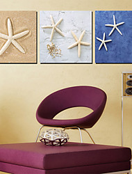 Leinwand Kunst Tiere Sea Star 3er Set