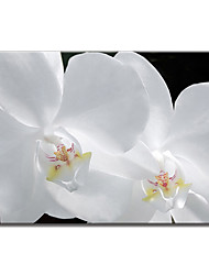Stretched Canvas Art Floral Pure Petal