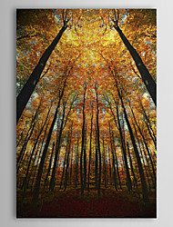 Stretched Canvas Art Beginning of Autumn by Philippe Sainte