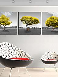 Stretched Canvas Print Art Landscape Under Tree Set of 3