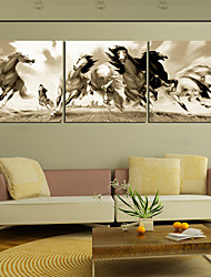 Stretched Canvas Print Art Animal Dashing Horses Set of 3
