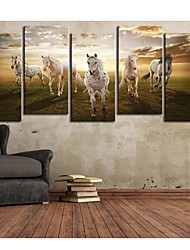 Stretched Canvas Art Animal A Pentium Horse Set of 5