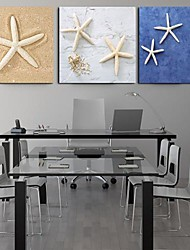 Stretched Canvas Print Art Animal Beautiful Starfish Set of 3