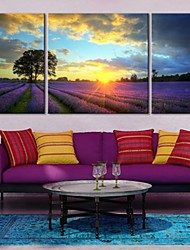 Stretched Canvas Art Under The Sunset of Lavender Farm Landscape Set of 3