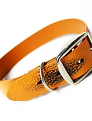 Dog Collar Orange Genuine Leather