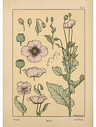 Pink Poppy Flower Roller Shade