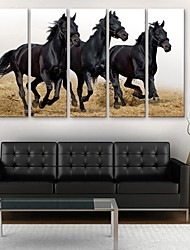 e-home® CANVAS és um cavalo set pintura decorativa em execução de 5