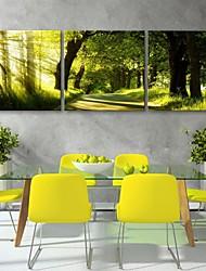 personalizado impressão em tela e-home® a trilha da floresta 30x30cm 40x40cm 60x60cm conjunto emoldurado pintura da lona de 3