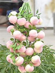manojo melocotón frutas decorativas