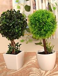"""3,1 """"9,4"""" l h naturelles plantes vertes arbres dans un pot en céramique blanche"""
