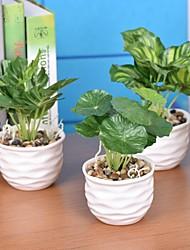 """3.9""""L 7.48""""H Fresh Green Plants in White Ceramic Basin"""