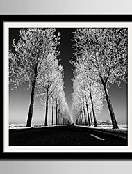 E-HOME® Framed Canvas Art, Neat Tree Framed Canvas Print