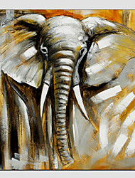 Oil Painting Elephant Style , Canvas Material with Stretched Frame Ready To Hang SIZE:70*70CM.
