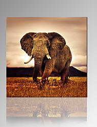 VISUAL STAR®Elephant Wood Frame Canvas Print Animal Wall Artwork For Home Decor Ready to Hang