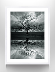 VISUAL STAR®Photo Frame Winter Tree Paper Print Abstract Landscape Wall Art Ready to Hang