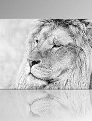 VISUAL STAR®Black and White Lion Wall Picture Modern Canvas Print Ready to Hang