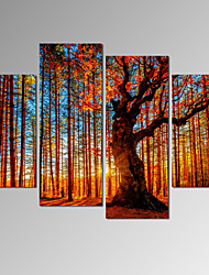 VISUAL STAR®Sunset in Forest Canvas Prints 4 Pieces Large Wall Art Ready to Hang