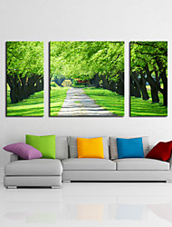 Photographic Canvas Print Three Panels Ready to Hang