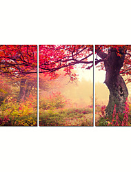 VISUAL STAR®Autumn Red Tree Canvas Print Forest Wall Art for Home Decoration Ready to Hang
