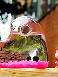 micro-algues billes de verre bouteille écologique plantes paysagères créative pot anniversaire est le cadeau de Saint-Valentin