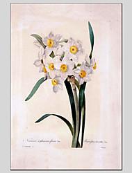 Pintados à mão Floral/BotânicoModerno / Estilo Europeu 1 Painel Tela Pintura a Óleo For Decoração para casa