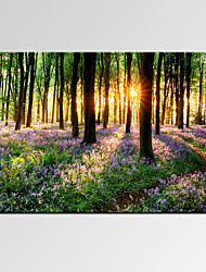 VISUAL STAR®Beautiful Lavender Forest Digital Canvas Prints Modern Bedroom Decor Art Print Ready to Hang